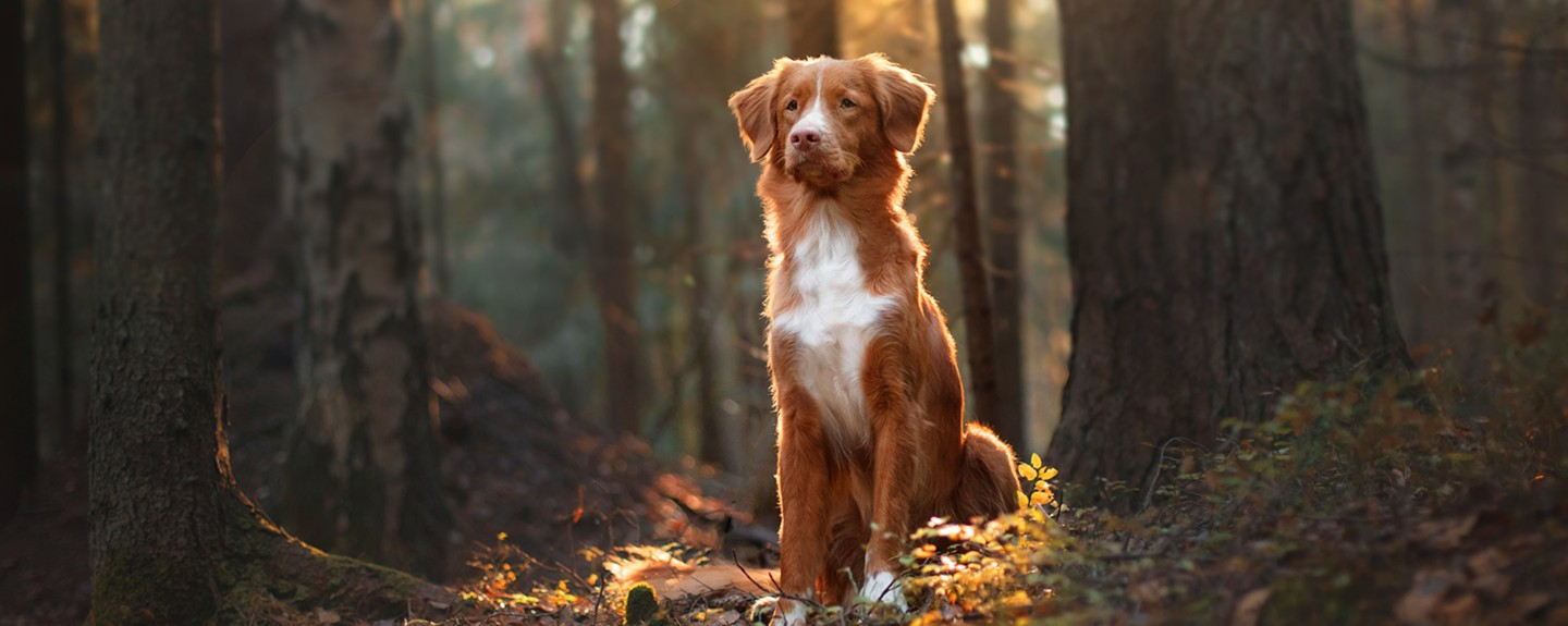 Natural Diet for Dogs